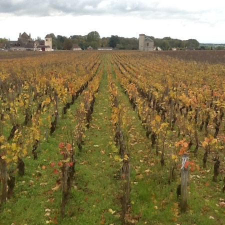 You can own a row of vines here at Vougeot