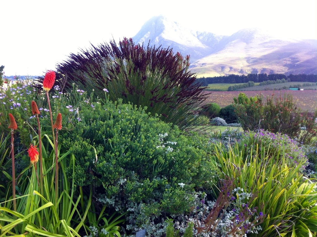 Cape Floral Kingdom is natures' colourful palette